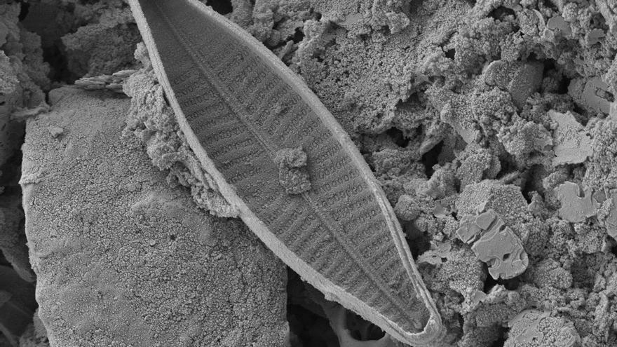 Hallan nuevas especies de algas en glaciares del volcán Antisana en Ecuador