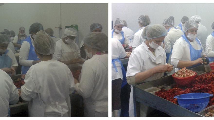 Trabajadoras 'pelando colitas' de cangrejo rojo en un vivero de Isla Mayor.