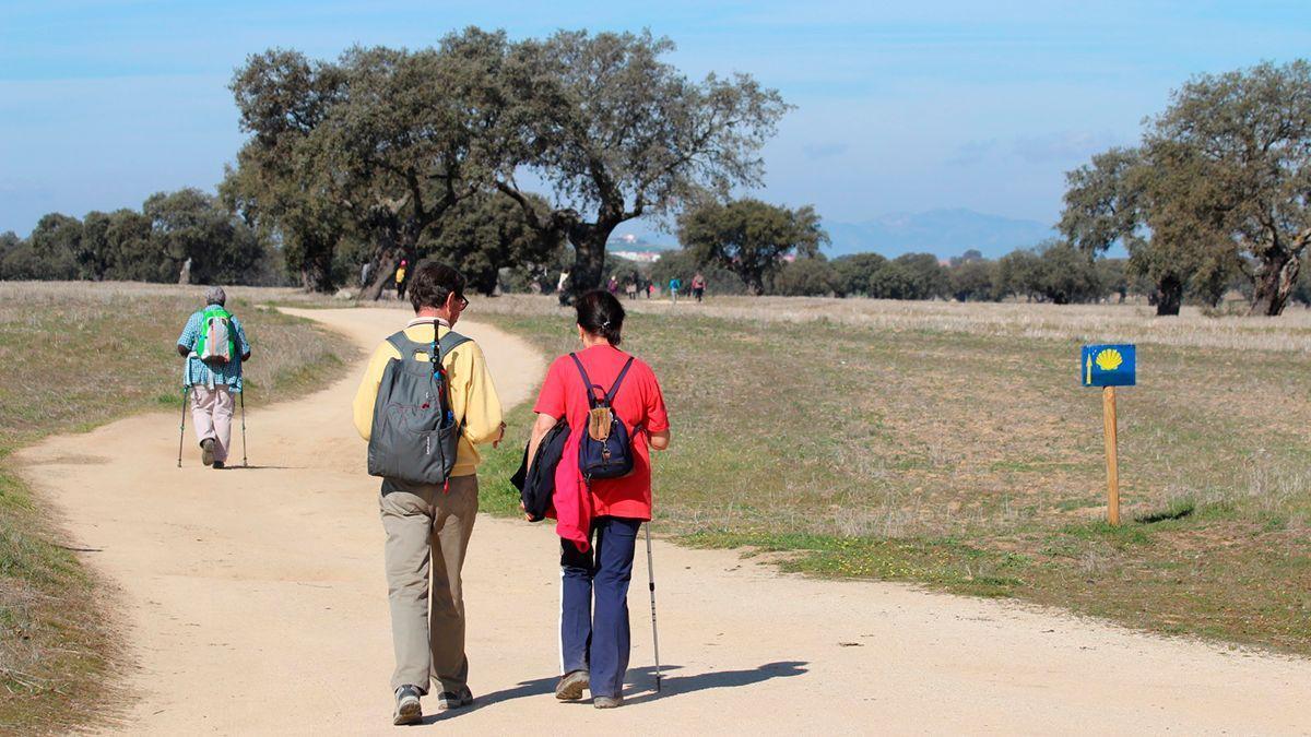 Camino Mozárabe entre encinas de la dehesa en la provincia de Córdoba.