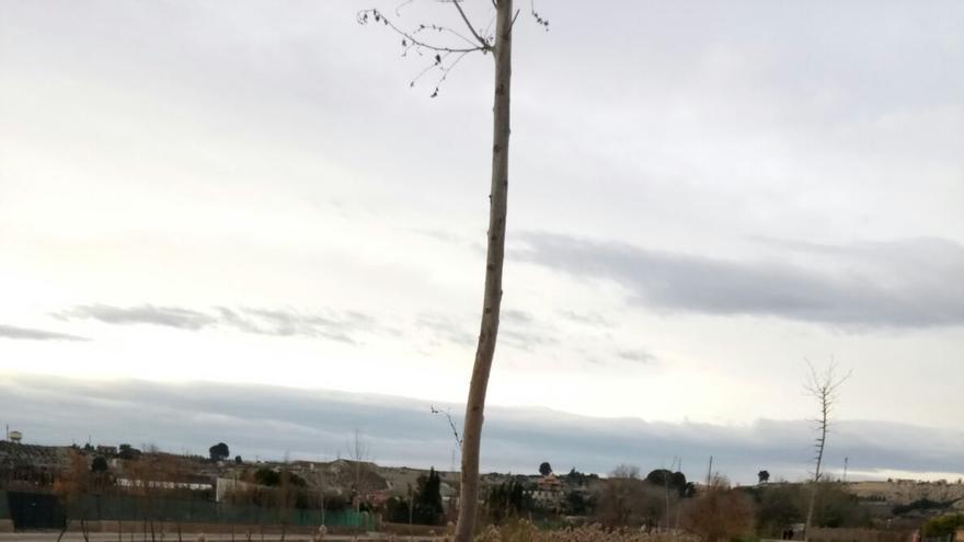 Árboles secos en las inmediaciones del río Segura a su paso por Cieza