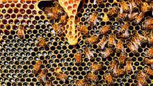 Los apicultores de Guadalajara quieren sumarse a las ayudas por la sequía tras una mala cosecha