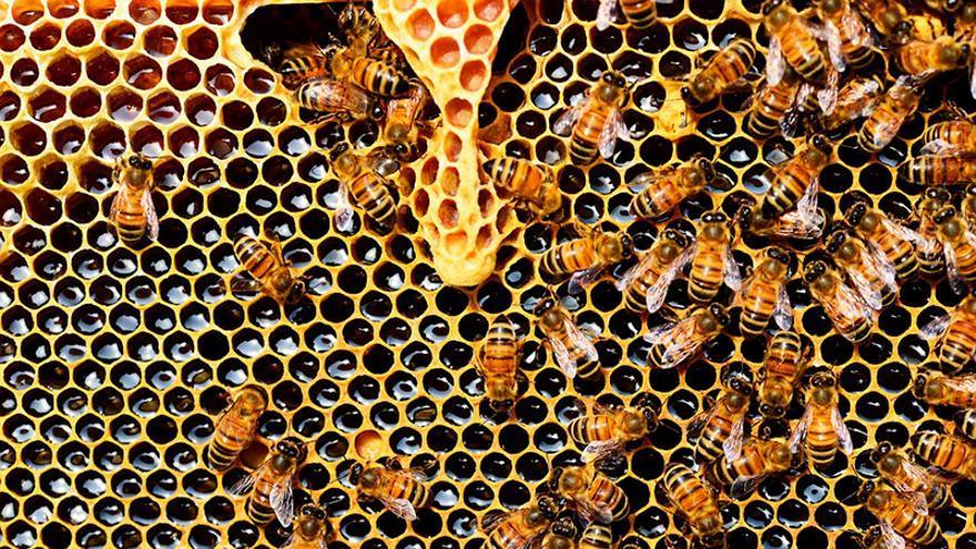 Imagen de archivo de un panal de abejas.