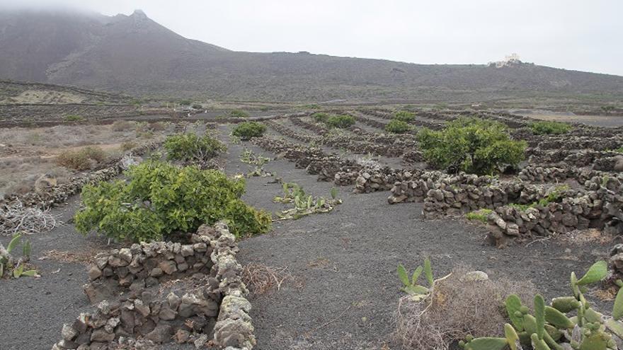 Plantación en la tierra volcánica de Haría