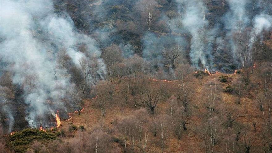 Veinticuatro incendios forestales continúan activos en 12 concejos asturianos