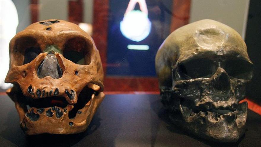 Los neandertales crecían tan despacio como los humanos modernos