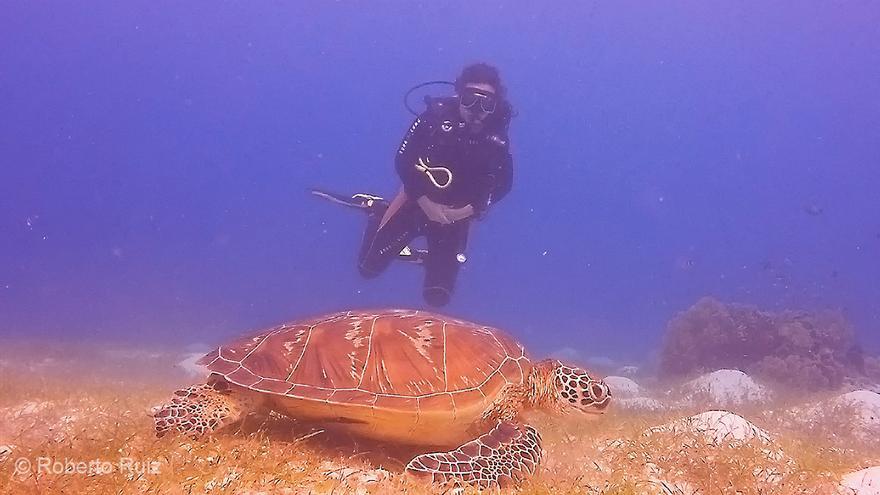 En Filipinas es muy fácil ver tortugas marinas, las verdes se encuentran en gran cantidad.