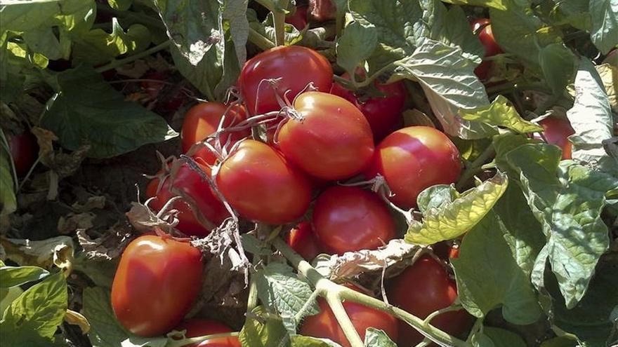 El sector hortofrutícola pide a Tejerina apoyos ante el veto ruso y Marruecos