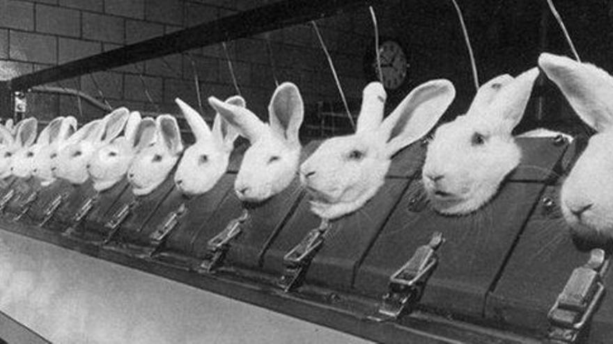 Conejos sometidos a la experimentación científica.