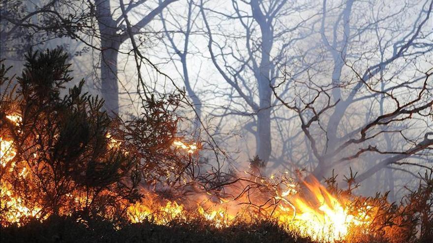 Las probables lluvias de fin de año ayudarán a aliviar los incendios