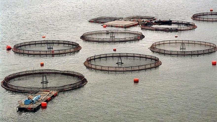 Advierten de los daños al mar austral de Chile por la producción de salmones