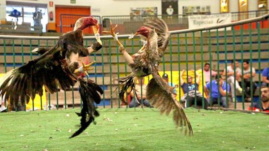 Peleas de gallos en López Socas.