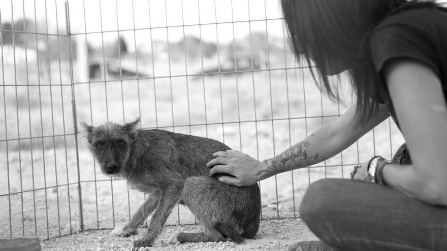 Rita, una perra recién rescatada por ERA, aún desconfía de las manos humanas.