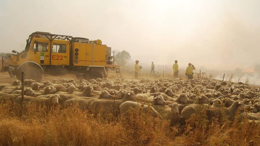 incendios forestales Extremadura