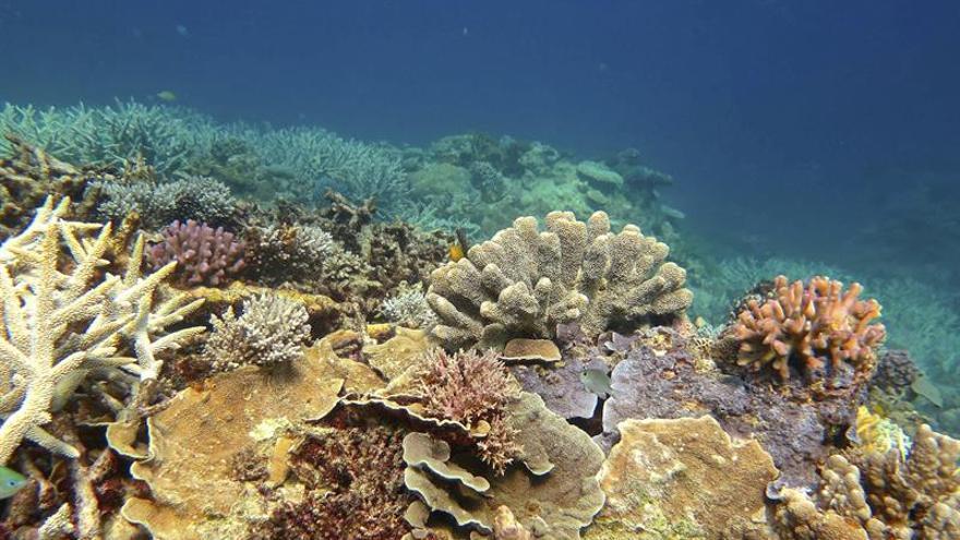 La Gran Barrera australiana en riesgo de ser declarada patrimonio en peligro