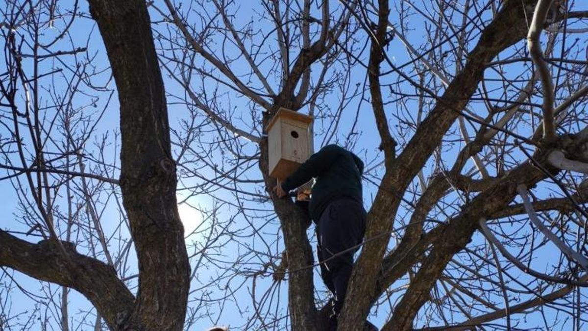 Colocación de una caja nido