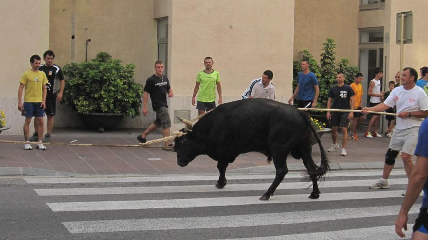 Imagen de un bou capllaçat