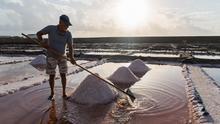 Extracción de sal en Tenefé.