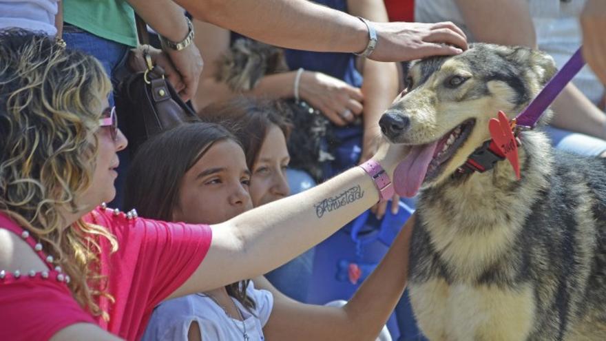 Uno de los canes que participaron en el anterior desfile del Bioparc