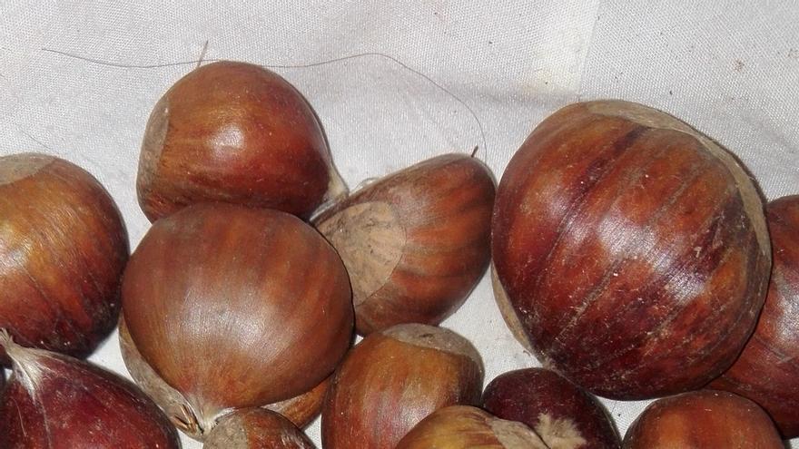 Arranca la recolección de la castaña en Huelva tras alcanzar la producción en Málaga los 3,5 millones de kilos