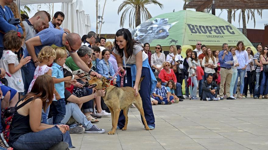 Desfile de perros abandonados de Bioparc Valencia