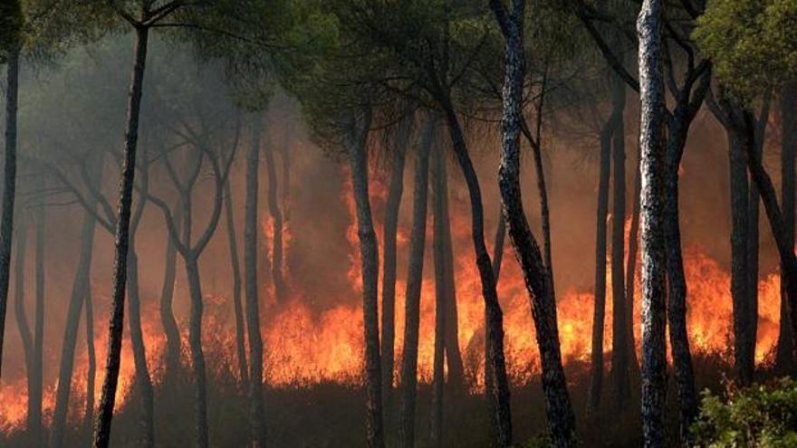 Las llamas queman los bosques de Moguer