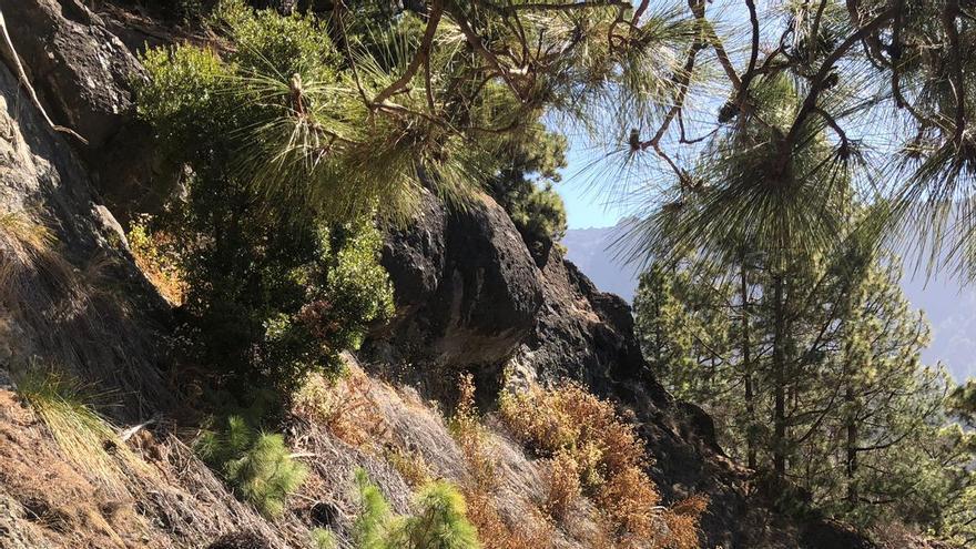 En la imagen se puede apreciar el efecto de la sequía  en el sendero  de Los Brecitos a la acampada, en las zonas bajas del Parque Nacional, con plantas secas.