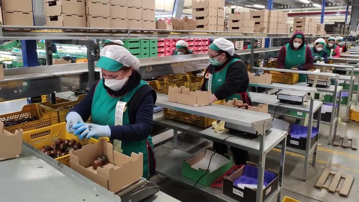 Envasadoras de productos hortofrutícolas de Almería durante una jornada de trabajo