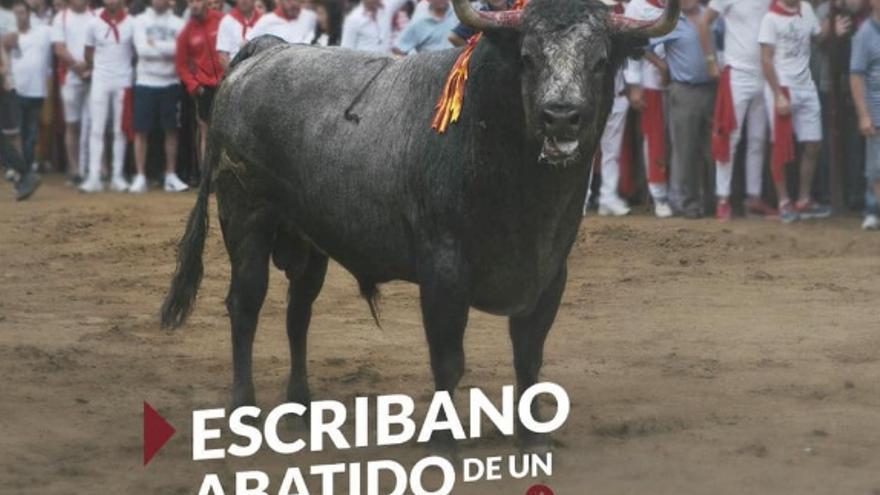 El toro 'Escribano', en los Sanjuanes de Coria