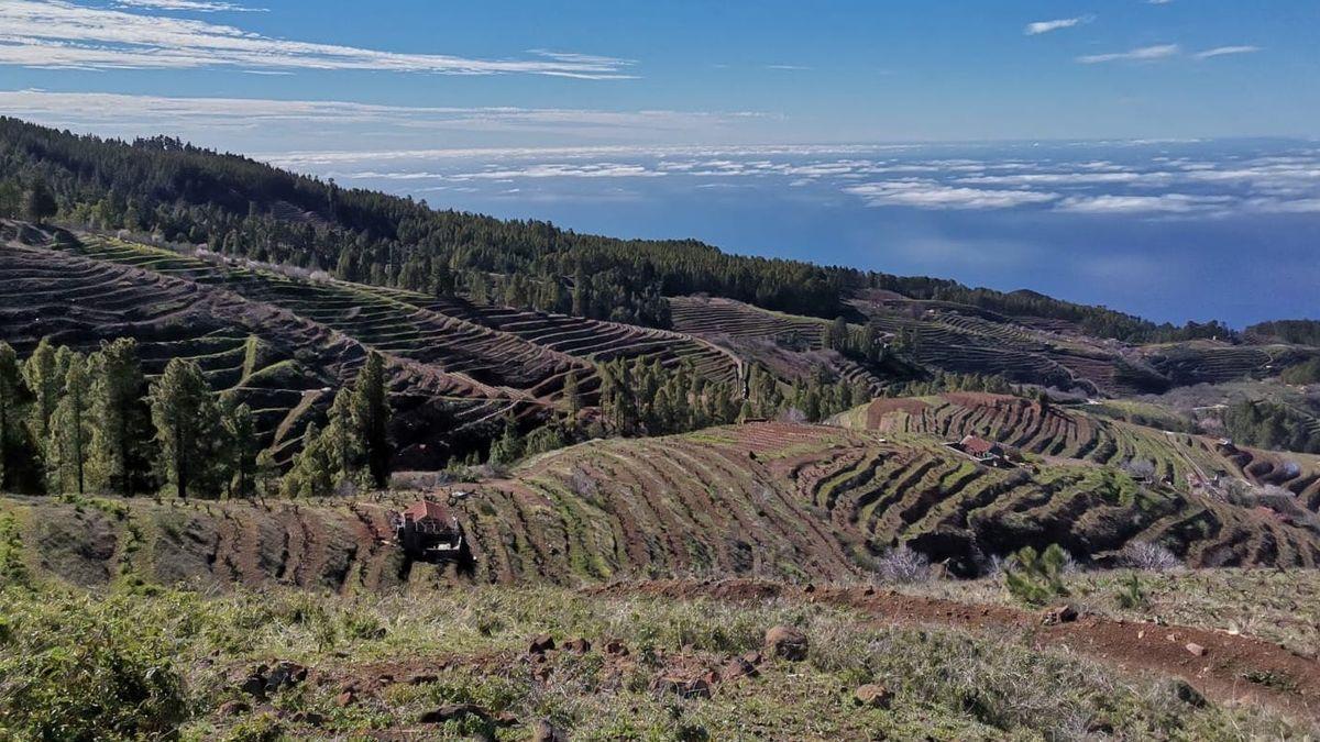 Viñedos en el norte de La Palma.