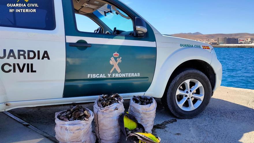 Denunciados tres mariscadores furtivos en Fuerteventura con 135 kilos de mejillón canario