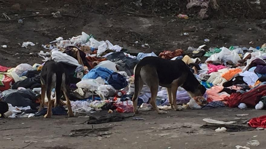 Perros callejeros en La Cañada Real. Foto: SPAP