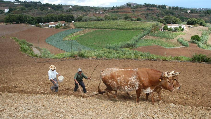Curso de ganadería del Cabildo de Gran Canaria.
