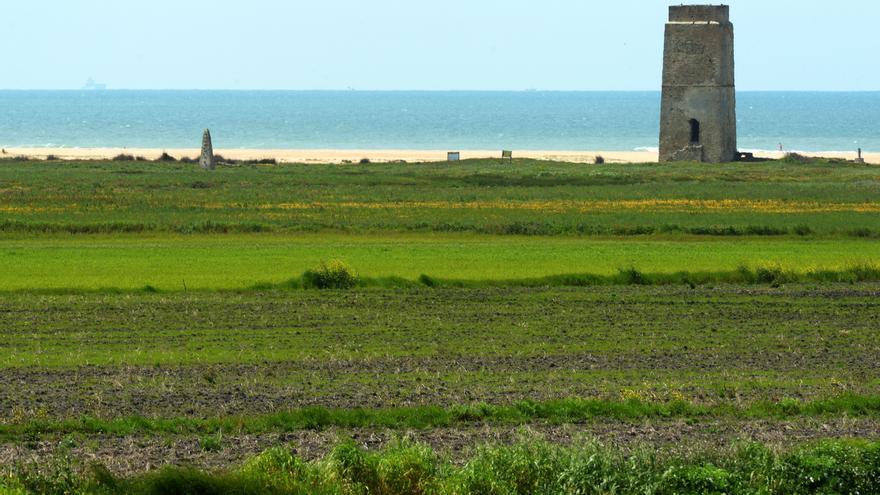 A la derecha, la torre de Castilnovo, que se sitúa a unos 500 m de la parcela hotelera de El Palmar, en el término municipal de Vejer/ Borja Benjumeda.