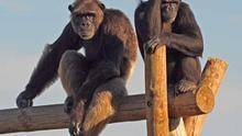 De Marta y Eider a Lola y Brenda: primates robadas y rescatadas en el centro Rainfer