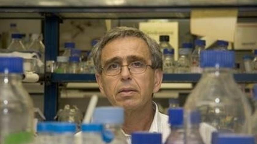 El investigador del CSIC Ginés Morata, nombrado miembro de la Royal Society