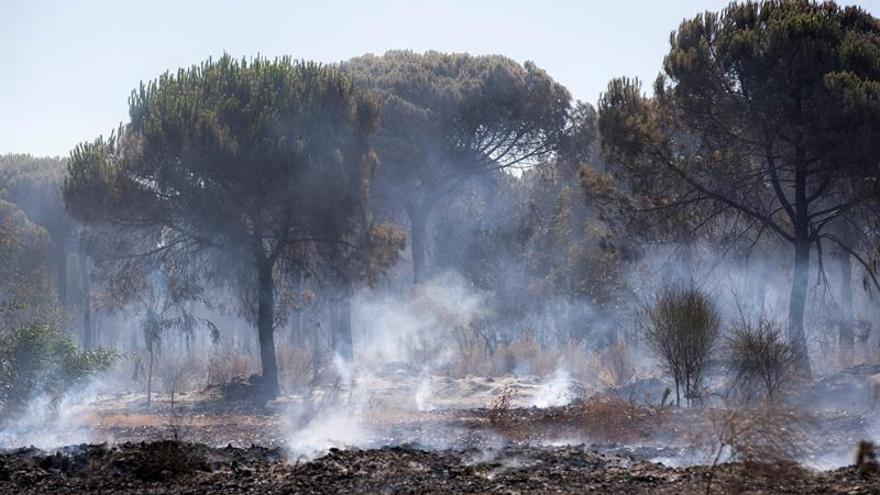 Informe concluye que  elorigen del incendio de Moguer estuvo en la carbonería
