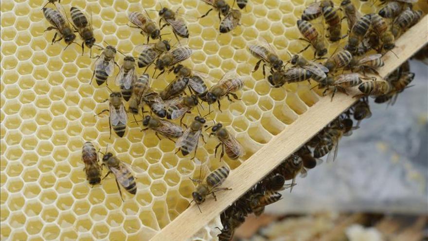 El colapso de las abejas de la miel preocupa a los científicos
