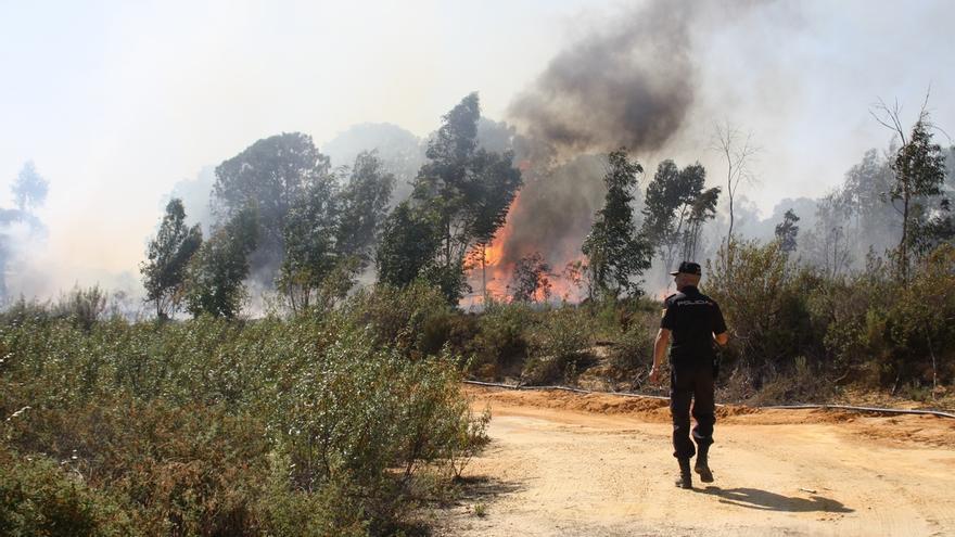 Los incendios forestales de 2014 calcinan en la región 7.002 hectáreas, un 24% menos que la media del decenio