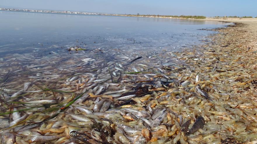 Miles de peces aparecen muertos en la orilla de una playa de San Pedro del Pinatar (Murcia)