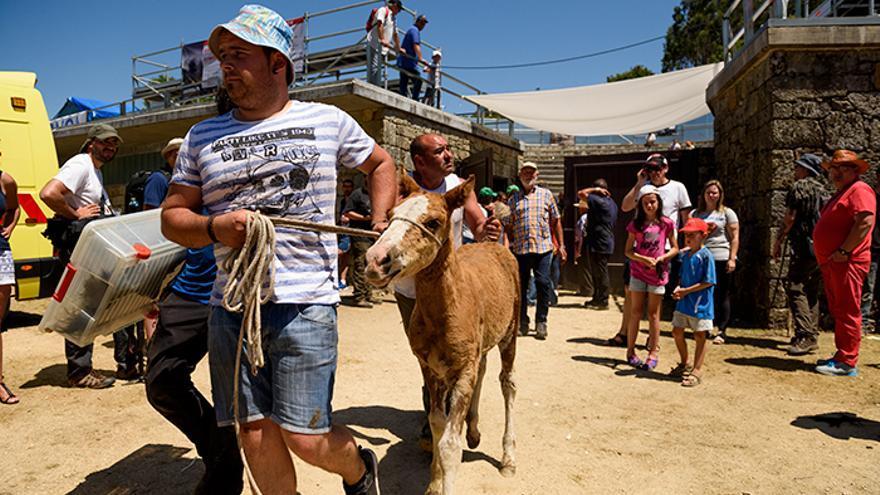 Un potrillo es sacado del 'curro' y llevado a un carro. Foto: El caballo de Nietzsche