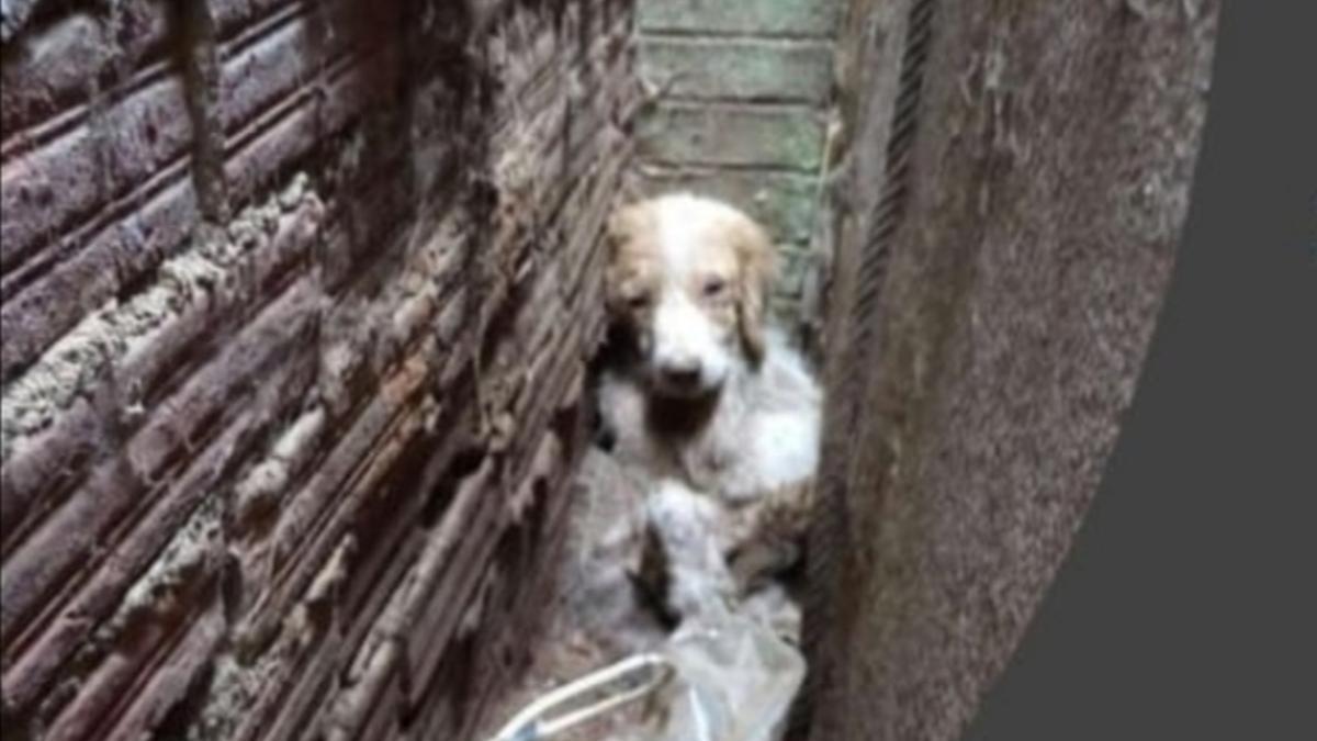 Uno de los animales rescatados en una casa de Santiago