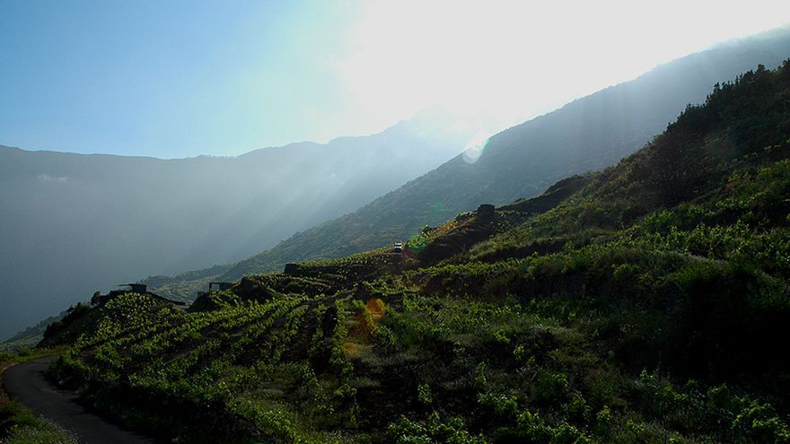 Cultivos de viñedos en El Hierro