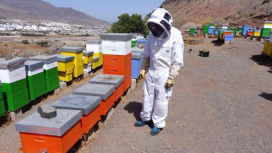 El Cabildo ayuda con 8.000 € a cinco asociaciones de apicultores registradas