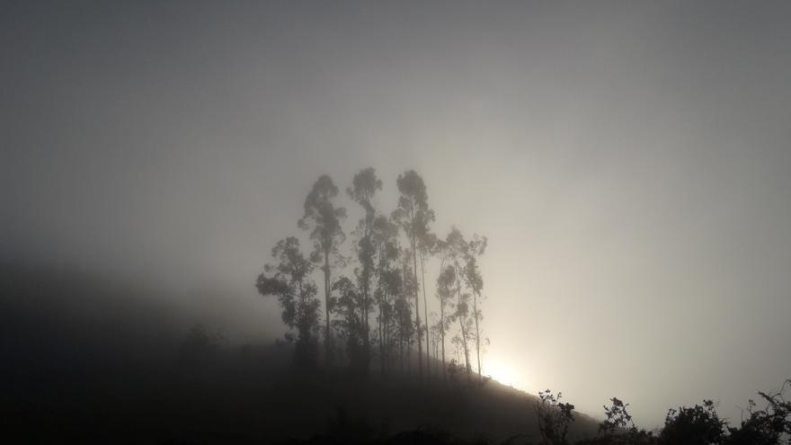 Niebla.
