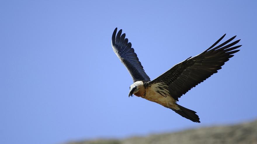 Directores de 11 de los 15 Parques Nacionales piden por carta el fin de las actividades como la caza en estos espacios