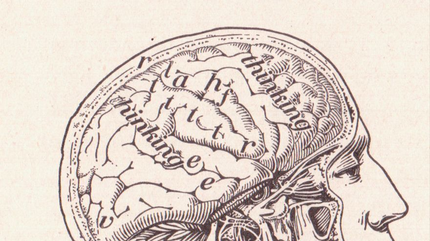Antiguo esquema del cerebro — Foto de perpetualplum@Flickr