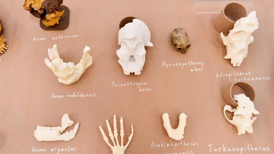 El Homo naledi, el misterioso eslabón de la evolución humana