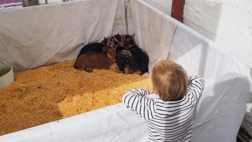 Los niños disfrutaron de los animales. Foto: JOSÉ AYUT.