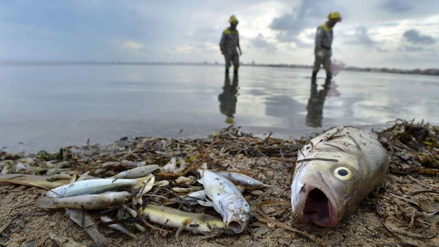 Peces muertos en la orilla del Mar Menor / VICENTE VICÉNS