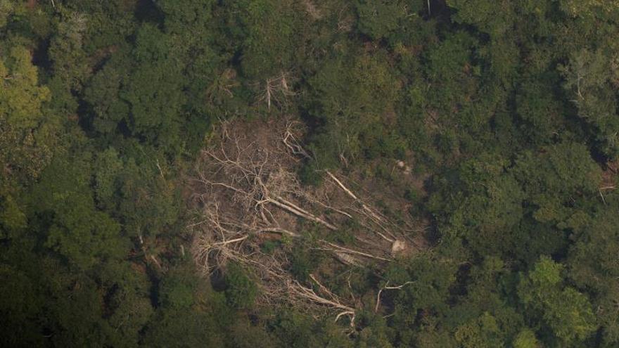 La deforestación en la Amazonía brasileña alcanza su mayor nivel en una década